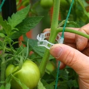 """Pomidorų augalų tvirtinimo laikikiliai """"Stabilumas"""" (50 vnt.)"""