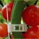 """Pomidorų augalų tvirtinimo laikikliai """"Geriausias derlius"""""""