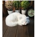 """Stilingoji taupyklė """"Baltas katinukas miega"""" (21 cm)"""