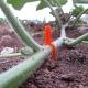"""Augalų ir gėlių šakelių prie žemės fiksatorius """"Aukščiausia kokybė"""" (100 vnt.)"""