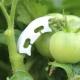 """Pomidorų šakelių laikiklis-tiesintuvas """"Aukščiausia kokybė"""" (100 vnt.)"""