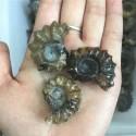 """Akmeninė fosilija """"3 kriauklelės"""" (amonitas)"""