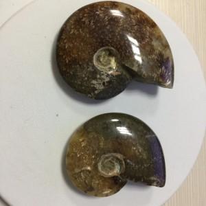 """Akmeninė fosilija """"Nuostabioji kriauklė 8"""" (amonitas)"""