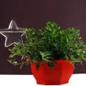 """Įsmeigiama stiklinė vaza """"Puikioji žvaigždė"""" (27 x 10 cm)"""