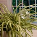 """Įsmeigiama stiklinė vaza """"Puikioji sraigė"""" (11 x 6 cm)"""